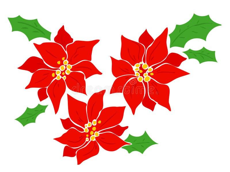 Poinsettia. ilustração royalty free