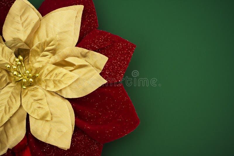 Poinsettia fotos de stock