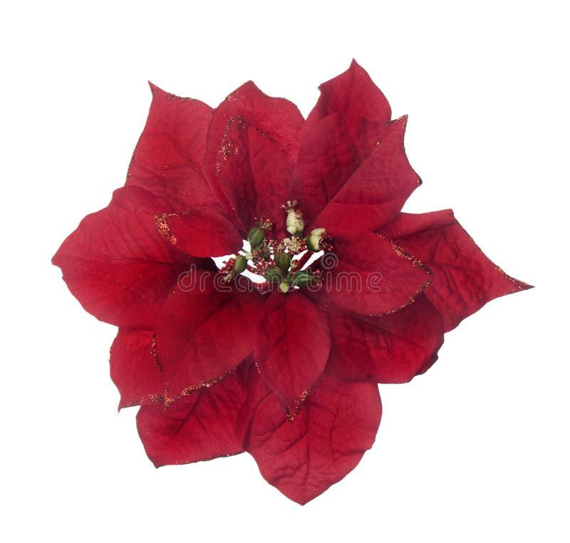 Poinsettia artificiale rosso su priorità bassa bianca fotografia stock libera da diritti