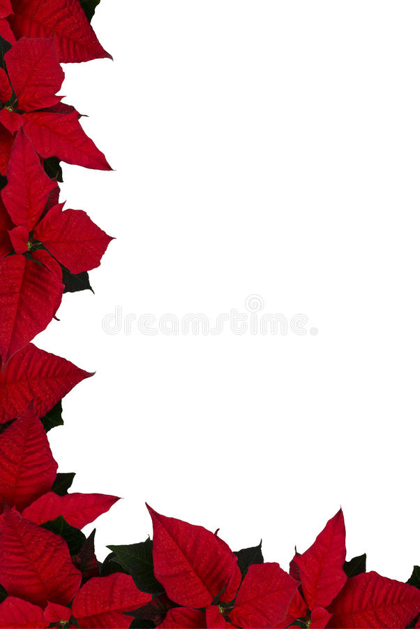 Poinsettia border. Picture of red poinsettia border royalty free stock image