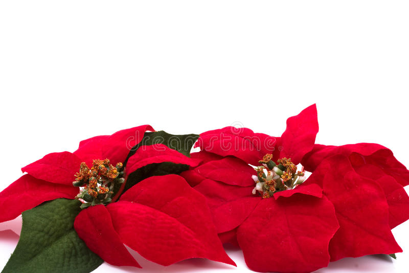 Poinsettia Border Royalty Free Stock Image