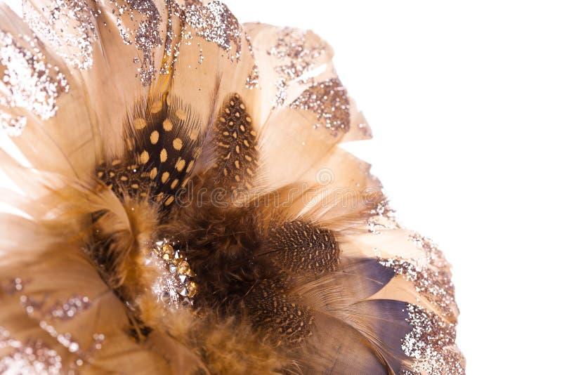 Poinsettia de la flor de la Navidad fotos de archivo