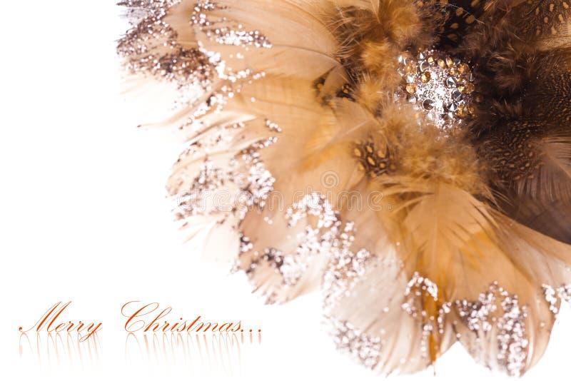 Poinsettia de la flor de la Navidad imagen de archivo