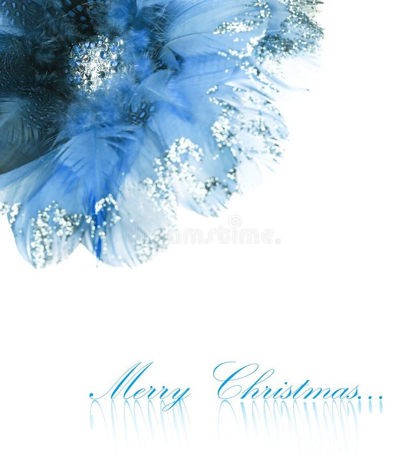 Poinsettia de la flor de la Navidad fotos de archivo libres de regalías