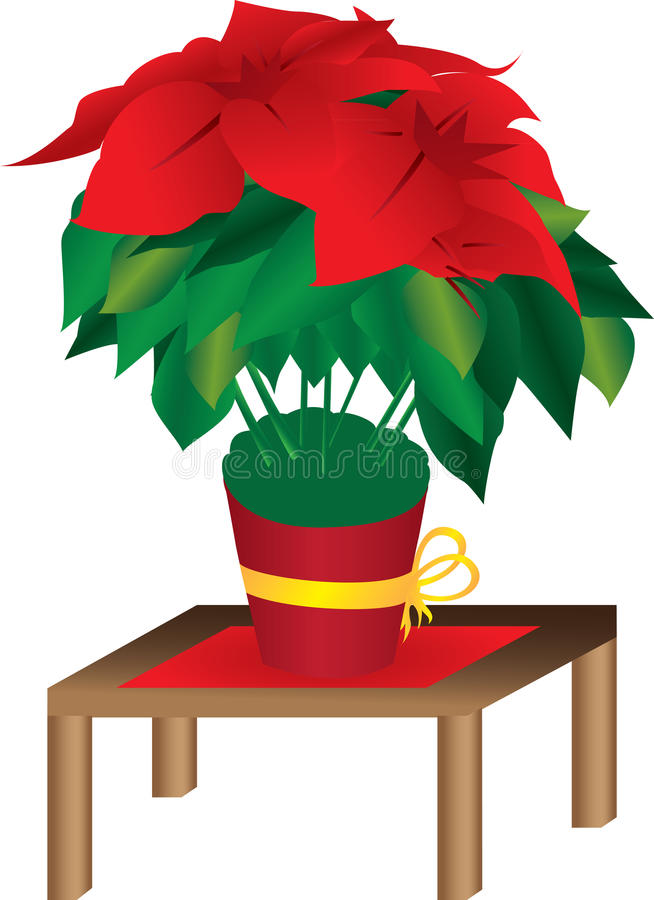 Download Poinsettia flower in bloom stock vector. Image of table - 17622581