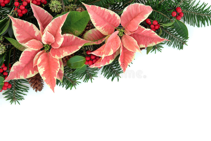 Poinsettia flower border stock photo image
