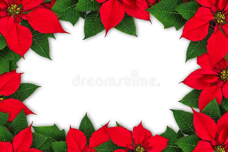 Poinsettia flower frame royalty free stock image