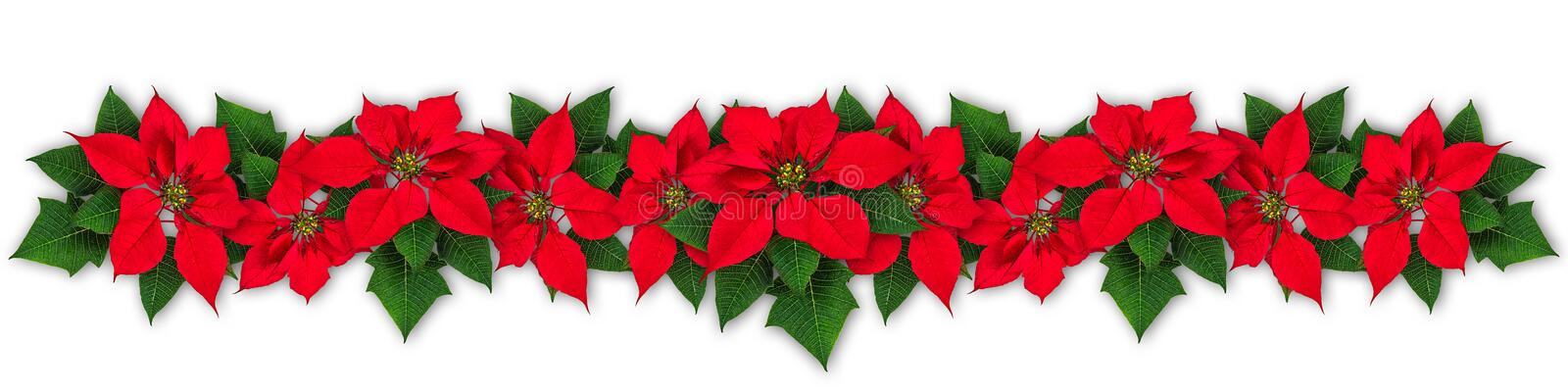 Poinsettia flower wreath stock photos
