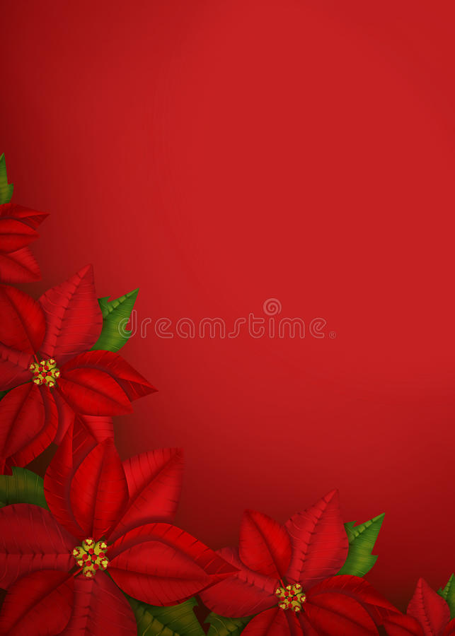 Poinsettia flowers background royalty free stock images