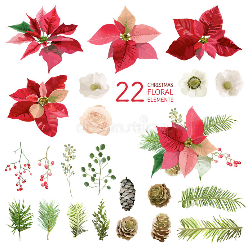 Poinsettia Flowers and Christmas Floral Elements - in Watercolor stock illustration