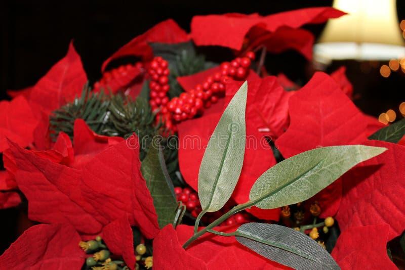 Poinsettia flowers stock photography