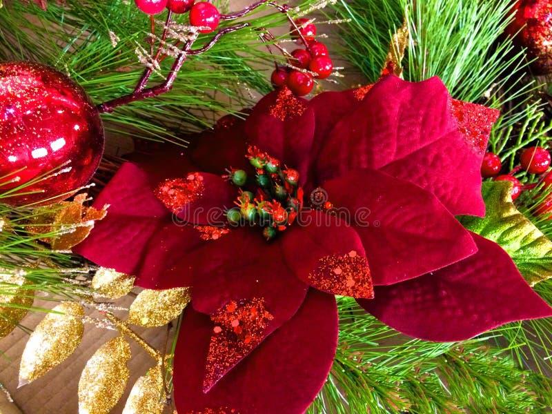 Poinsettia red Christmas. Red poinsettia Christmas decoration royalty free stock photo