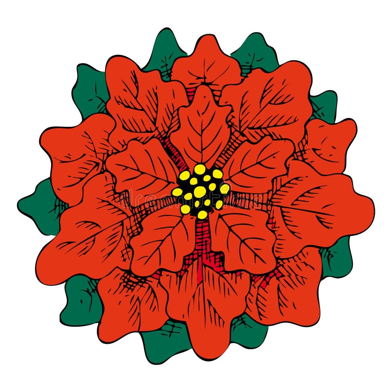 Poinsettia red flower hand drawn illustration. royalty free stock photos