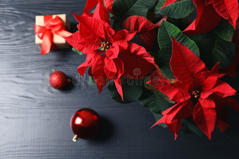Poinsettia traditional Christmas flower with decor and gift stock photography