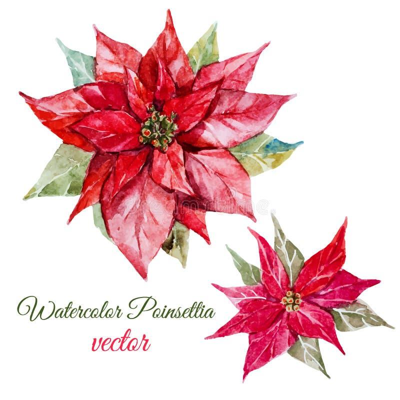 Poinsettiabloem vector illustratie