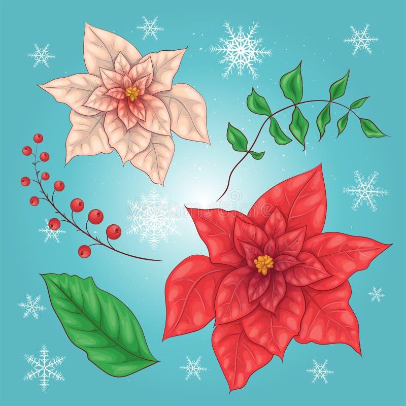Poinsettiabloemen en Kerstmis Bloemenelementen Vector royalty-vrije illustratie