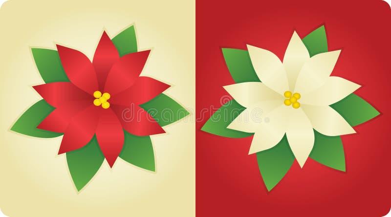 Poinsettias illustration stock