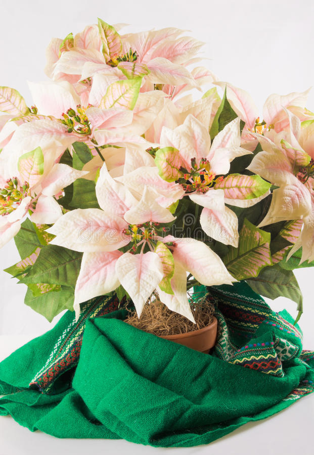 Download Poinsettias stock photo. Image of fabric, photography - 30648052