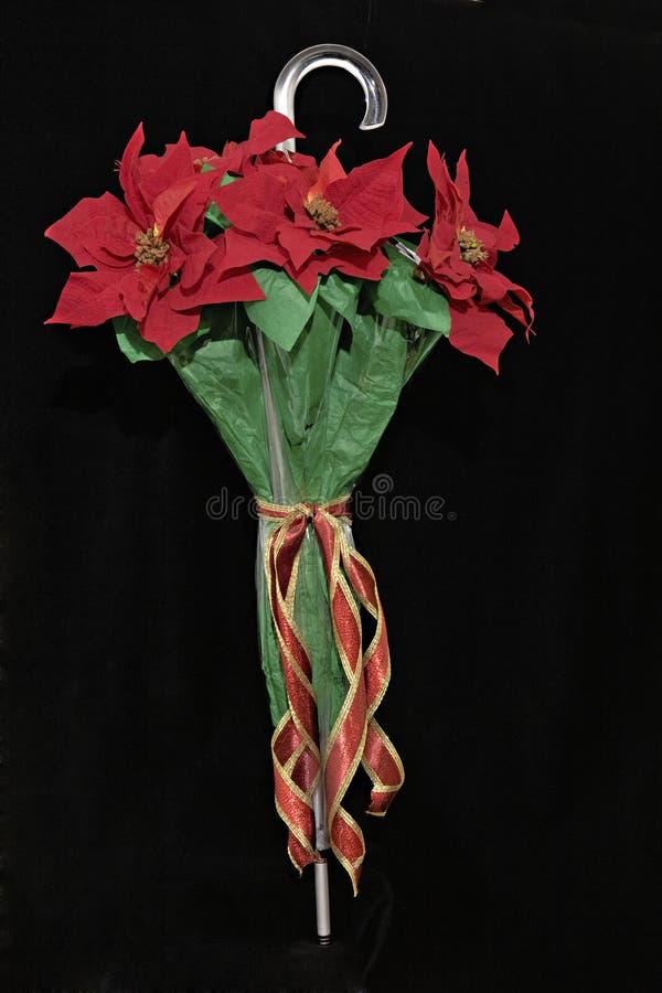 Poinsettias de fixation de parapluie image libre de droits