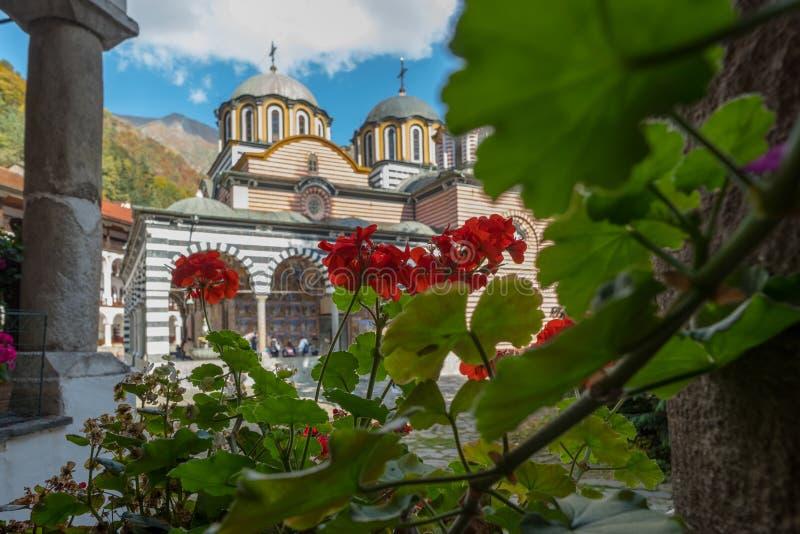 Poinsettias rouges lumineuses devant l'église principale, monastère de Rila, Bulgarie photographie stock