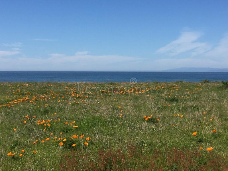 Point Buchon Trail - Fields of poppies with ocean view royalty free stock photography