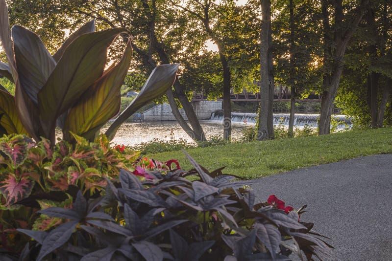 Point de mire sélectif d'une cascade au parc du port de Bellamy avec des fleurs Intérêt de premier plan image stock