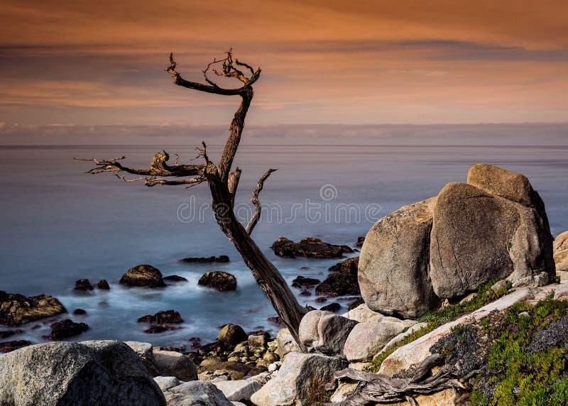 Point de Pescadero d'arbre de Ghost photo stock