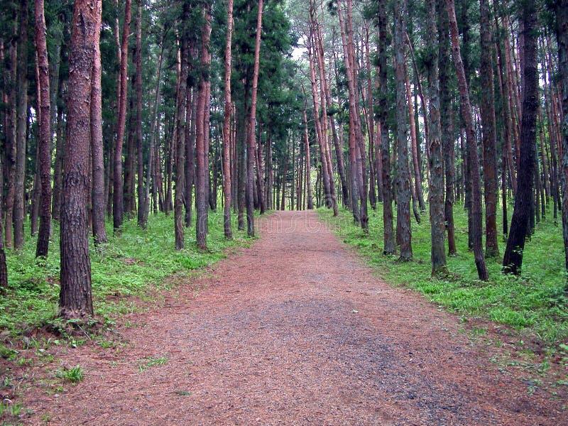 Point de vue dans la forêt photo stock