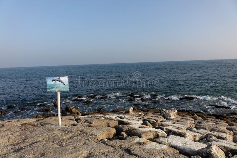 Point de vue de dauphin dans Salalah photographie stock libre de droits