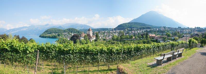 Point de vue sur la ville de spiez de colline de vignoble, landscap bernese d'oberland images libres de droits