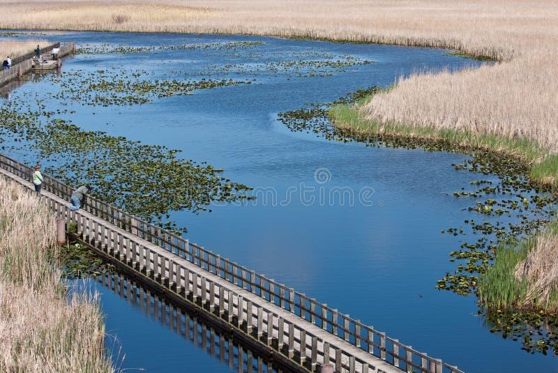 Point Pelee, Canada photos libres de droits