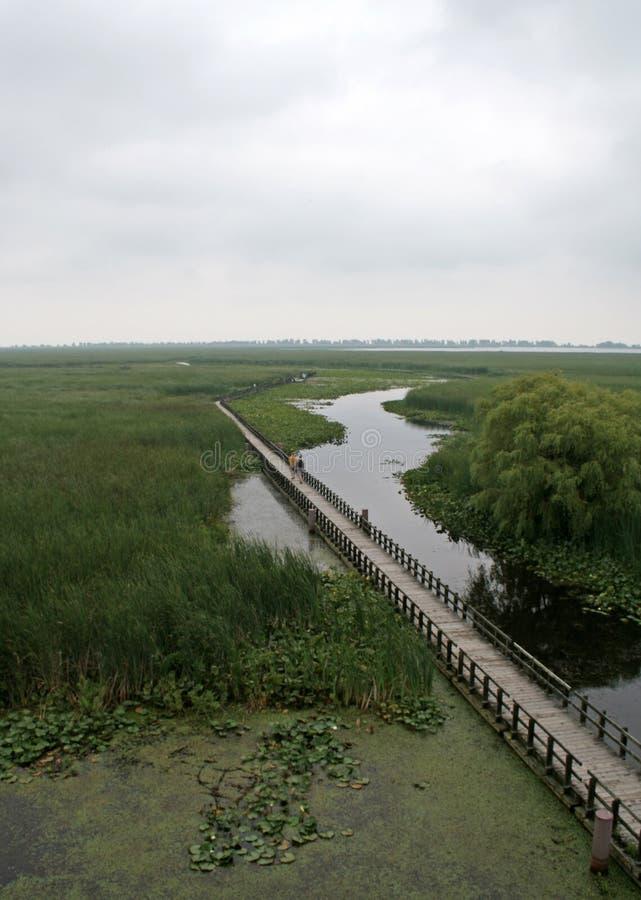 Download Point Pelee Swamp Boardwalk Stock Photo - Image: 31509016