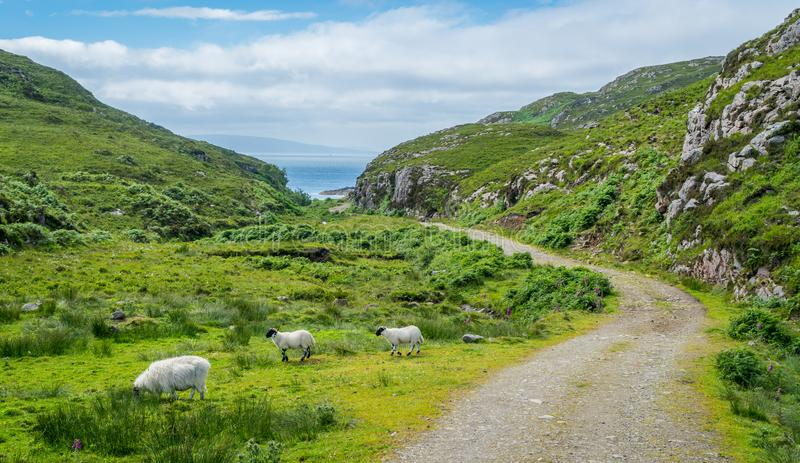 Scenic landscape in Point of Sleat, the southernmost point of Skye. Scotland. Point of Sleat is the southernmost point of the isle of Skye, in Scotland royalty free stock images