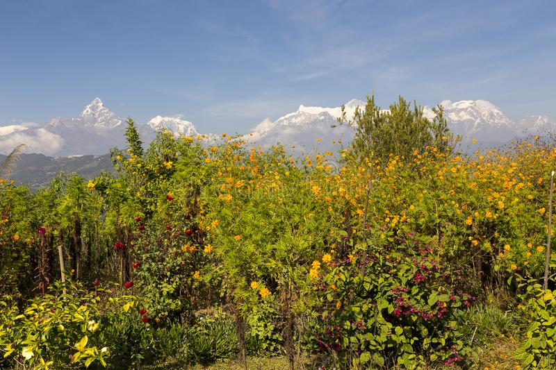 Point of view over Mount Fishtail, Annapurna and Dhaulagiri range in the background near Pokhara, Nepal royalty free stock photo