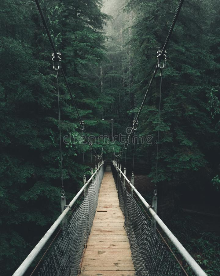 Point of view shot of a narrow suspension bridge in a thick beautiful forest. A point of view shot of a narrow suspension bridge in a thick beautiful forest stock photos