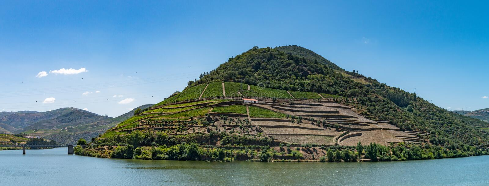 Point of view shot of terraced vineyards in Douro Valley. Point of view shot from historic train in Douro region, Portugal. Features a wide view of terraced royalty free stock images