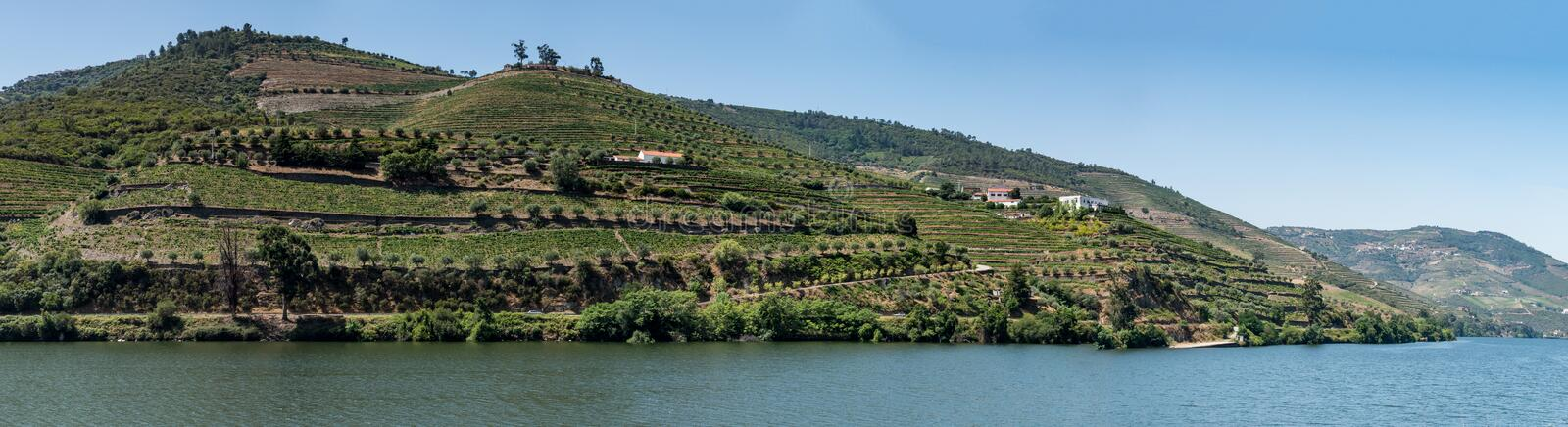 Point of view shot of terraced vineyards in Douro Valley. Point of view shot from historic train in Douro region, Portugal. Features a wide view of terraced royalty free stock photo