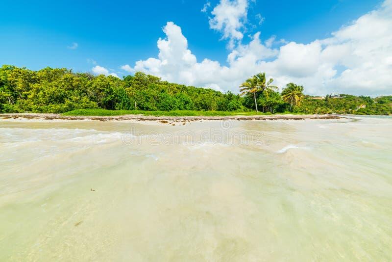 Pointe de la Saltdam kust i Guadeloupe som ses från vattnet royaltyfri bild