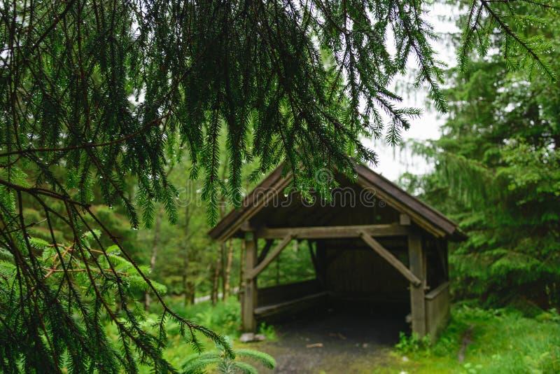 Pointeaux impeccables Un belvédère en bois dans la forêt conifére images stock