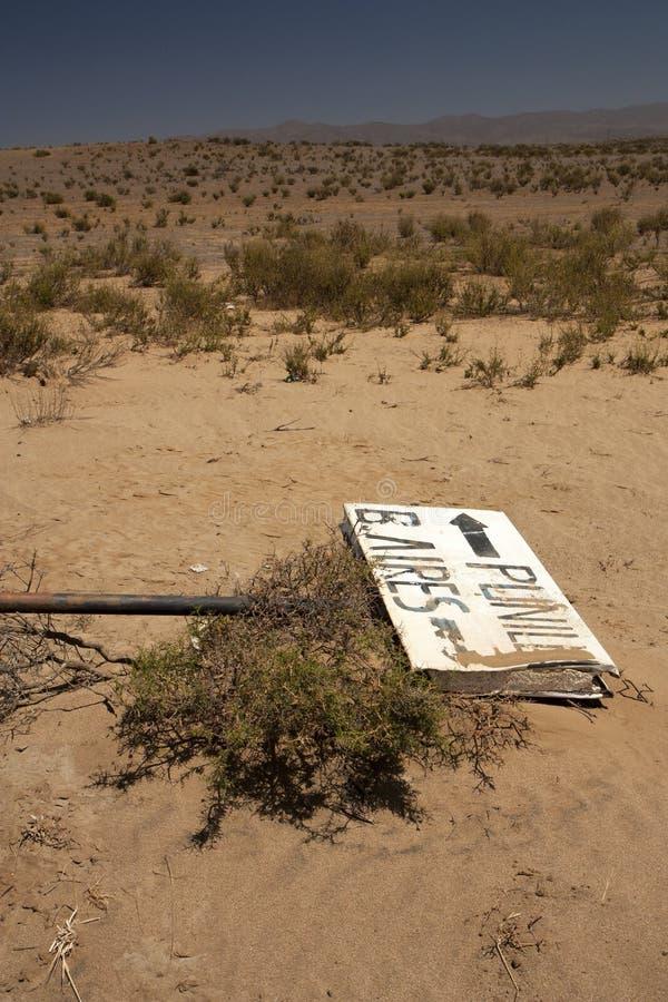 Pointer In Desert Stock Image