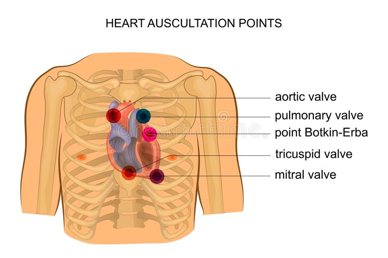 Points d'auscultation de coeur illustration stock