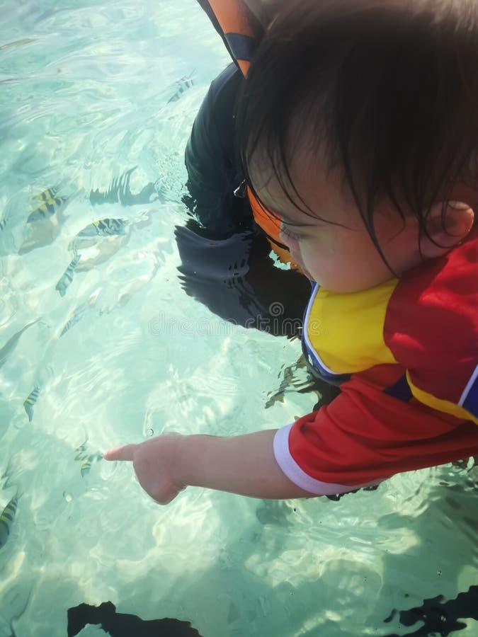 Points de bébé aux poissons nageant autour en mer clair comme de l'eau de roche de l'eau photos libres de droits