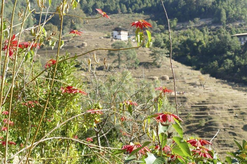 Pointsettia en pieken van de Himalaya-berg stock afbeelding