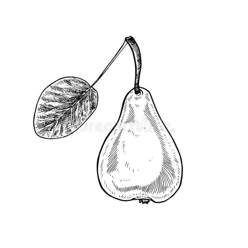 Poire avec feuille, style de gravure dessiné à la main, illustration d'esquisse vectorielle illustration stock
