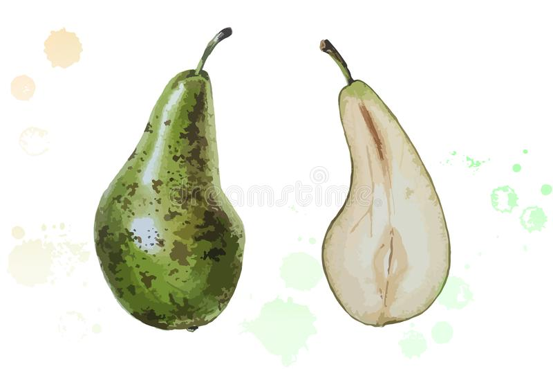 Poire d'aquarelle d'illustration de vecteur photos stock