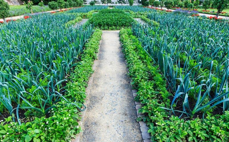 Poireau et persil - carré de légumes encadré par des fraisiers photographie stock libre de droits
