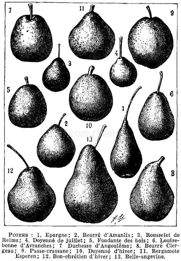 Poires-fruits Free Public Domain Cc0 Image