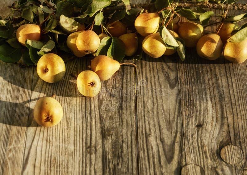 Poires savoureuses et juteuses jaunes et oranges mûres fraîches, certains sur la branche avec le feuillage sur le fond gris en bo photos stock