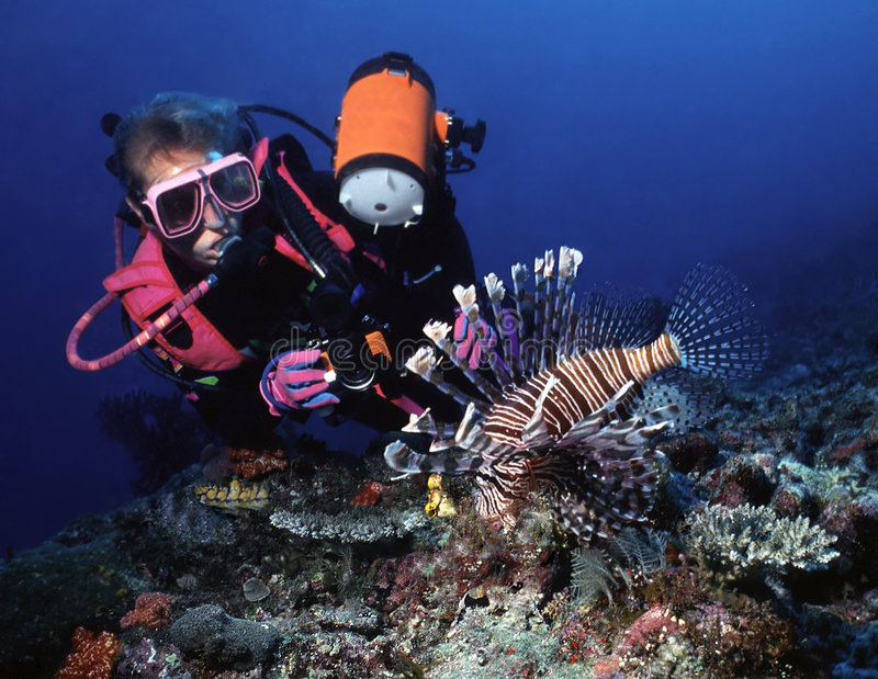 Poised Lion. Patient underwater photographer frames her subject, a beautiful lionfish (turkeyfish