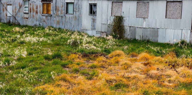 Poisoned apenó varios tonos de torneado de la hierba alta de amarillo, de anaranjado, y el verde detrás de un edificio oxidado di imágenes de archivo libres de regalías